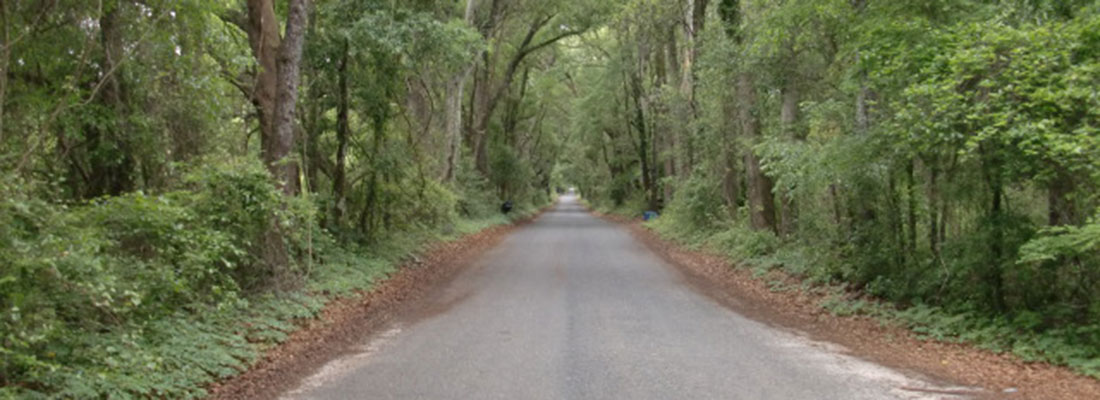 Photo of 15th St/Canopy road in Newberry, FL Lost, looking for a home